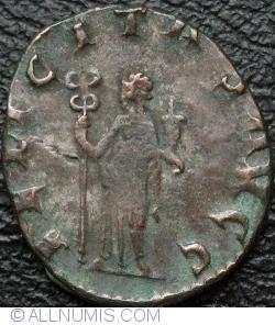 Antoninia 253-260